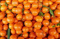 Сочный мандарин  отдушка, Роскосметика - 10 мл