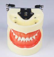 Модель, фантом со съемными зубами для обучения стоматологов (Детская)