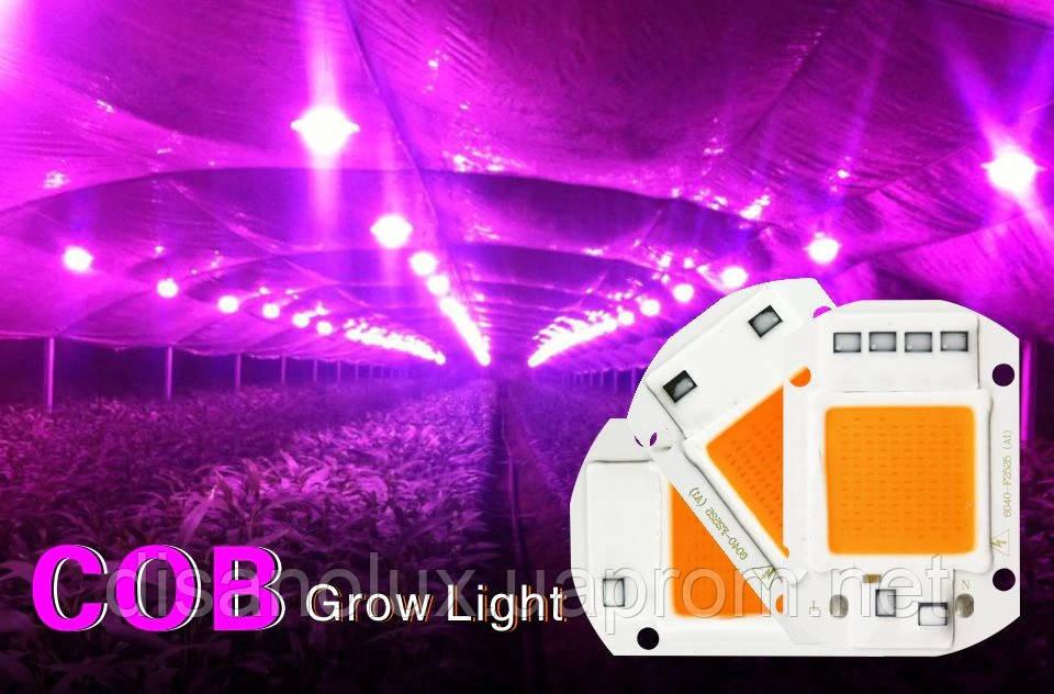 Светодиодная матрица фито  для растений  LED COB 50вт 230в Full Spectrum