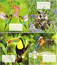 Тетрадь цветная  12 листов (косая) Картинки в ассортименте