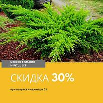 АКЦИЯ!!! Скидка 30% на Можжевельник средний 'Mint Julep' в С3 при покупке 4 единиц