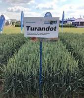 Насіння пшениці озимої Турандот (1 репродукція)
