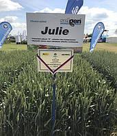 Насіння пшениці озимої Юлія (1 репродукція)