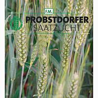 Пшеница озимая, Галлио, 1-репродукция, Австрия
