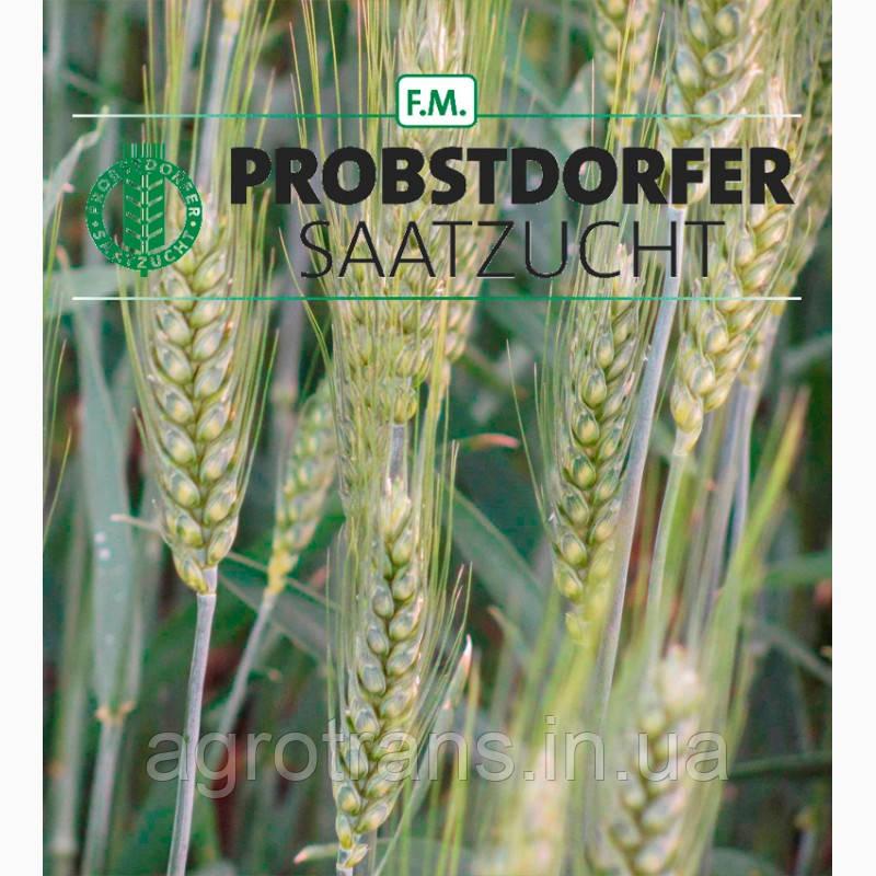 Пшеница озимая, Роланд, 1-репродукция, Австрия