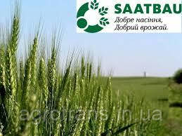 Пшеница озимая, Паннонiкус, 1-репродукция, Saatbau, Австрия
