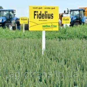 Пшеница озимая, Фиделиус, 1-репродукция, Saatbau, Австрия