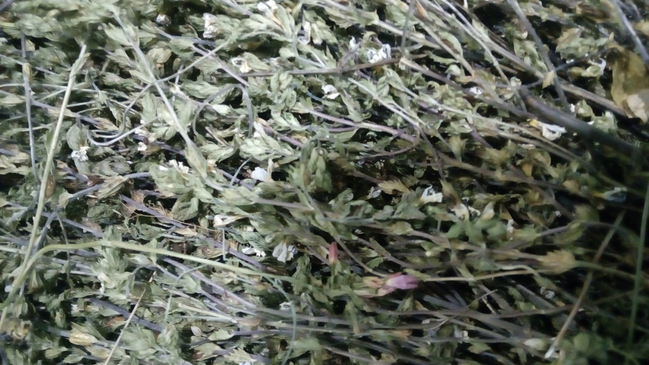 500г. Очанка трава