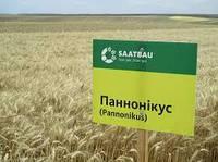 Озимая пшеница ПАННОНИКУС, Saatbau, 1 Репродукция