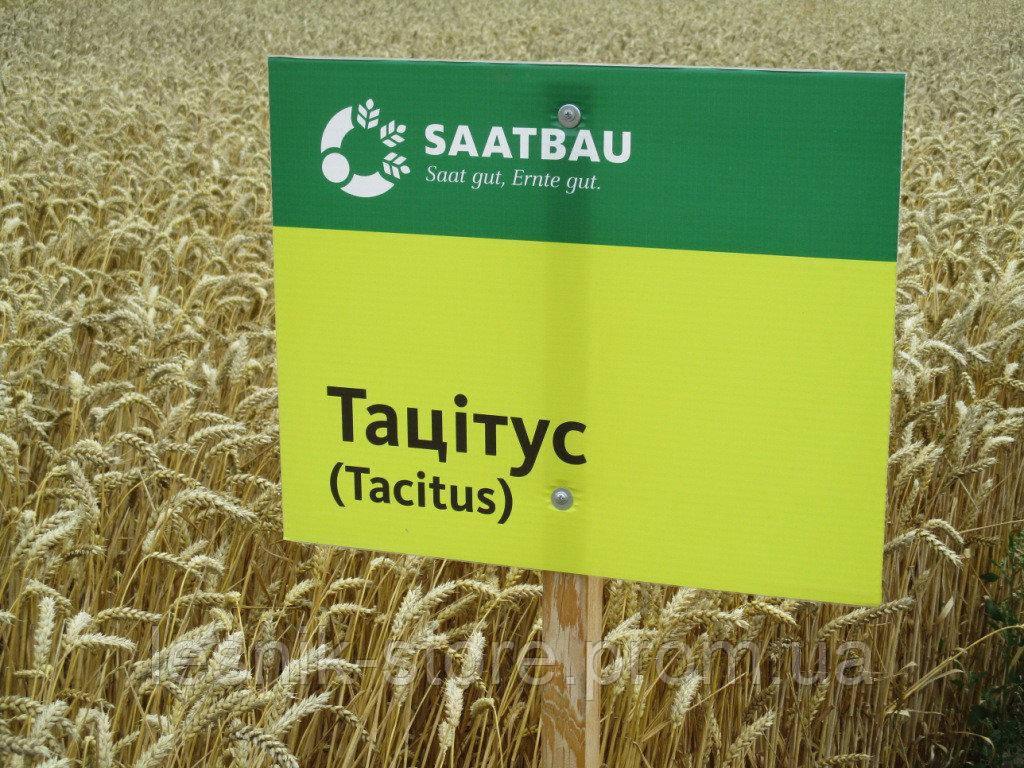 Озимая пшеница ТАЦИТУС, Saatbau, 1 Репродукция
