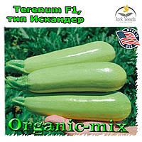 Семена кабачка Теренум F1 / Terenum F1, тип Искандер, ТМ Spark Seeds (США), проф. пакет 500 семян