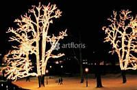 Украшение деревьев гирляндами, иллюминация парков, подсветка дерева, новогоднее оформление деревьев
