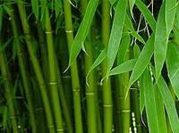 Жалюзи бамбуковые 50мм все цвета
