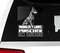 Наклейка на машину Цвергпинчер на борту (Миниатюрный пинчер), фото 1