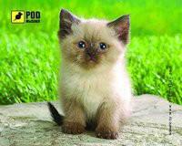 Коврик для компьютерной мышки podmyshku Сиамский котик