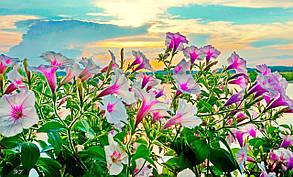 Фотокартина на холсте Цветы и закат 50х70 см