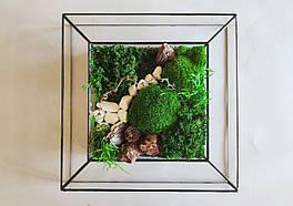 Картина Зі Стабілізованим мохом у Скляній Рамці