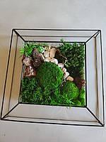 Картина Со Стабилизированным мхом в Стеклянной Рамке , фото 4