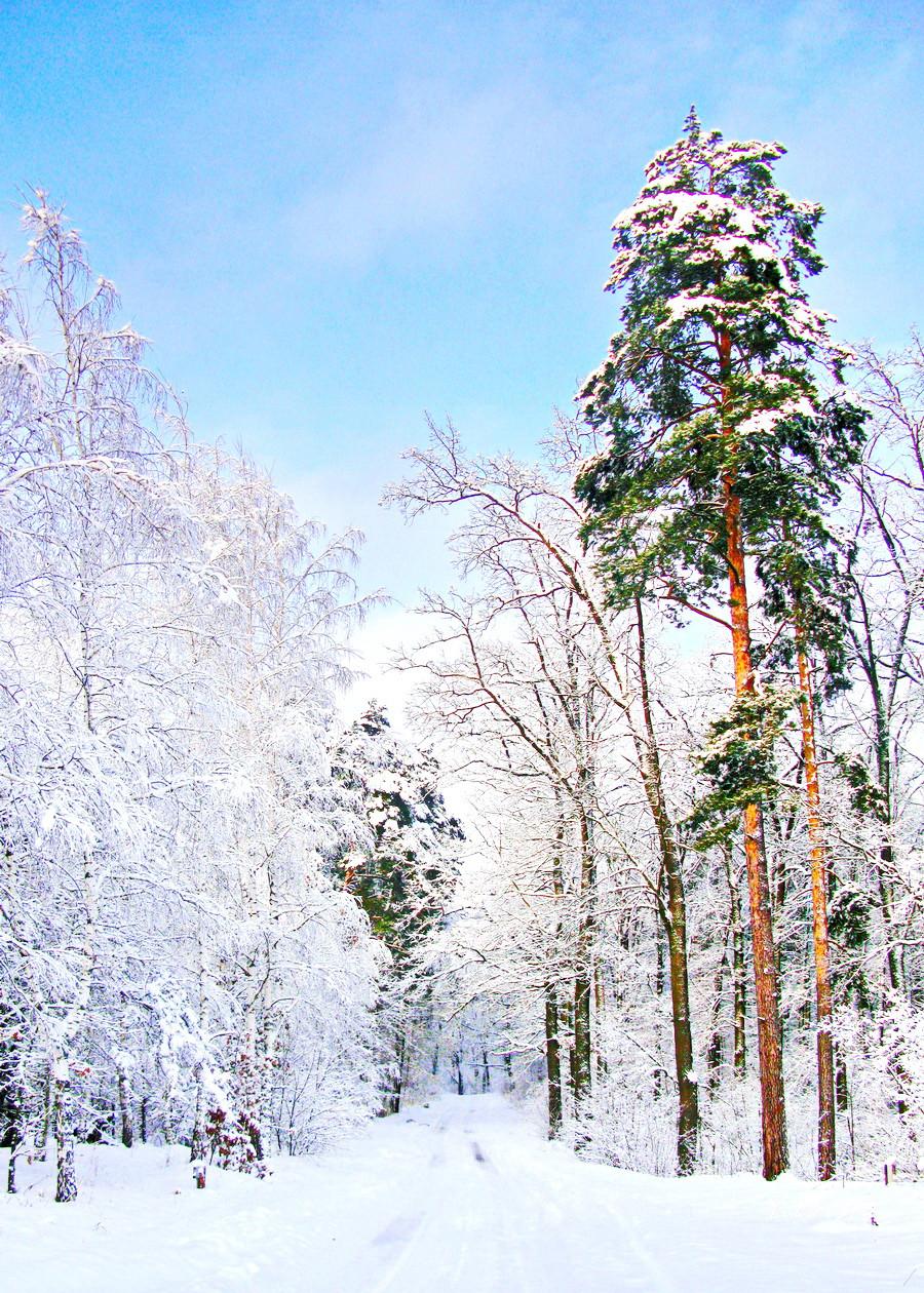 Фотокартина на холсте В зимнем лесу   50х70 см
