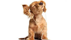 Від стресу для собак