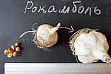 Рокамболь испанский зубки 5-10 грамм (10 штук) (слоновий чеснок семена) гигантский лук-чеснок, насіння часнику, фото 3