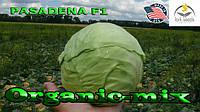 Капуста ранняя Пасадена F1 (Lark seeds, США), проф.пакет 1000 семян