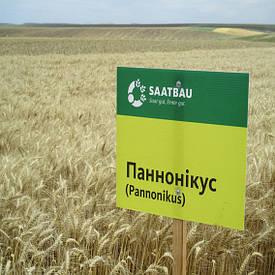 Озимая пшеница, ПАННОНИКУС, Saatbau, 1я Репродукция