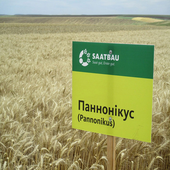 Озима пшениця, ПАННОНИКУС, Saatbau, 1я Репродукція