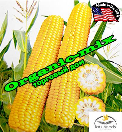 Семена, кукуруза сахарная Рання Насолода F1 (США), 25 000 семян, ТМ Lark Seeds