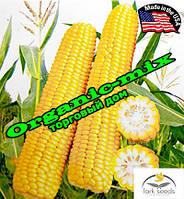 Кукуруза сахарная Рання Насолода F1 (США), 25 000 семян, ТМ Lark Seeds