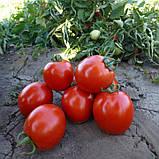 Асвон F1 семена томата низкорослого Kitano 1000 шт, фото 2