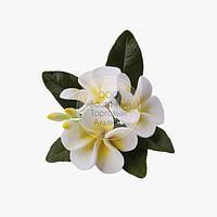 Букет из мастики - Плюмерия белая