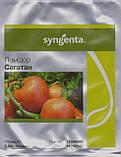 Сагатан F1 семена томата низкорослого Syngenta Голландия  2500 шт, фото 3