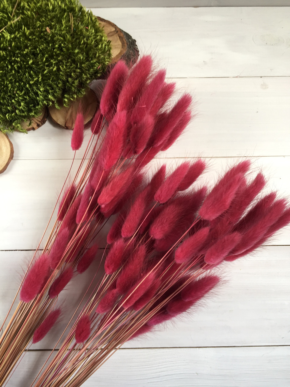 Лагурус  бордовый сухоцвет ( 50 шт )