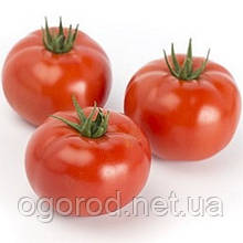 Сагатан F1 10 шт насіння томату низькорослого Syngenta Голландія