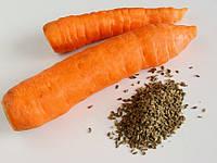 Правила обработки моркови перед посадкой