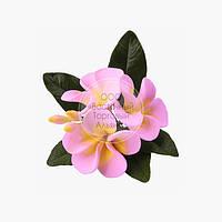Букет из мастики - Плюмерия розовая