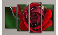 Модульная картина Красная роза 63х102 см (HAF-083)