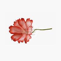 Квіти з мастики - Космея червона