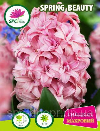 Гиацинт махровый Spring Beauty, фото 2