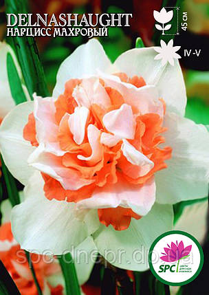 Нарцисс махровый Delnashaught, фото 2