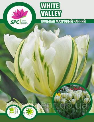 Тюльпан махровый ранний White Valley
