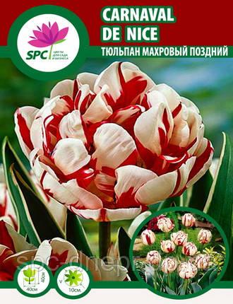 Тюльпан махровый поздний Carnaval De Nice