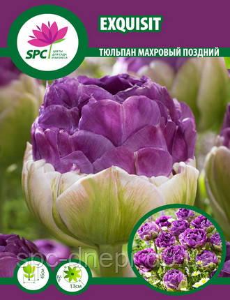 Тюльпан махровый поздний Exquisit, фото 2
