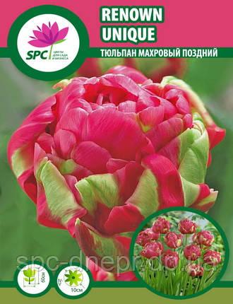 Тюльпан махровый поздний Renown Unique