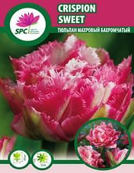 Тюльпан махровый бахромчатый Crispion Sweet
