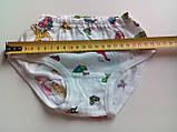 Трусики для девочек, модель 250101100, рост 122-128, размер 68 / трусы труси / БЕМБИ, фото 2