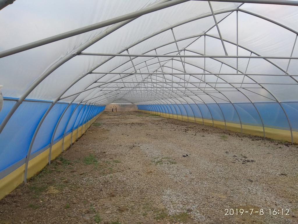 теплица фермерская промышленная шириной 10 метров изнутри