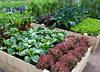 Севооборот овощей: схема для органических гряд.