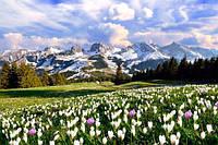 Глянцевые фотообои природа весна разные текстуры , индивидуальный размер